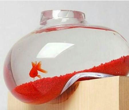 چگونه ماهی قرمز را زنده نگه داریم