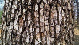 گرانترین چوب دنیا چیست