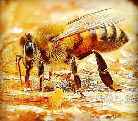 فواید حشرات چیست