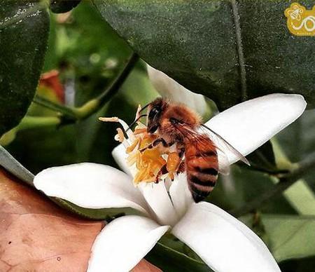 چرا عمر زنبورهای کارگر در تابستان کمتر از زمستان است؟