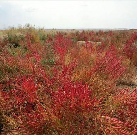 چه گیاهانی در آب شور رشد میکنند
