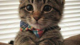 گربه رقصاندن کنایه از چیست