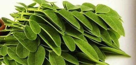 گیاه ماریانا چیست