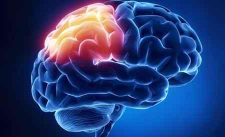 تاثیر-فست-فود-بر-سیستم-عصبی