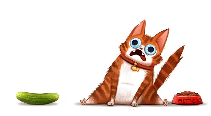 دلیل ترسیدن گربه ها از خیار چیست؟
