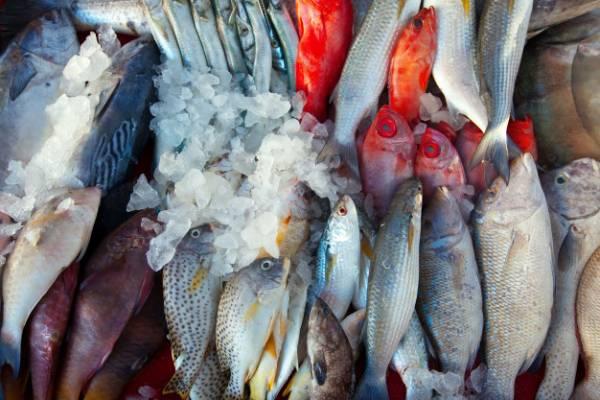 مصرف ماهی پرورشی