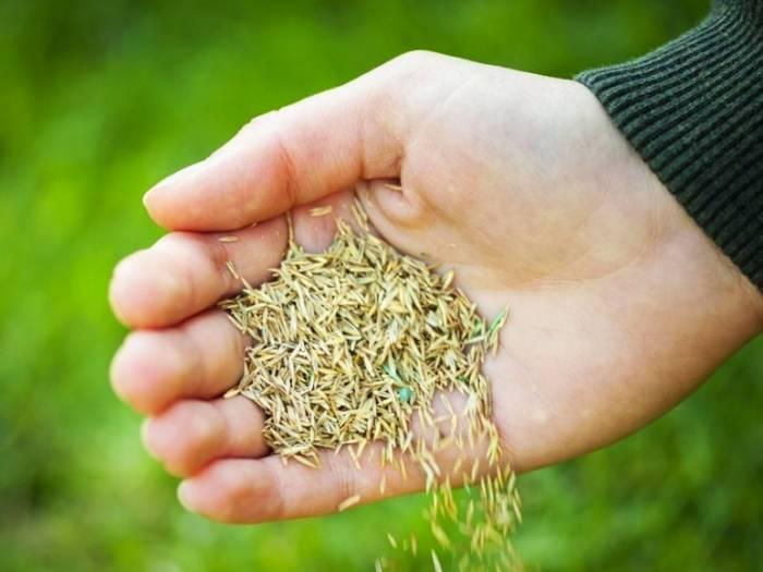 روش ضدعفونی بذر