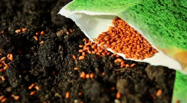 ضدعفونی کردن بذر