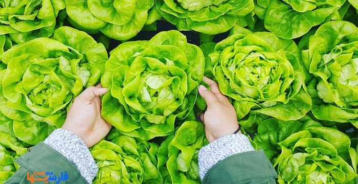 سبزیجات سبز