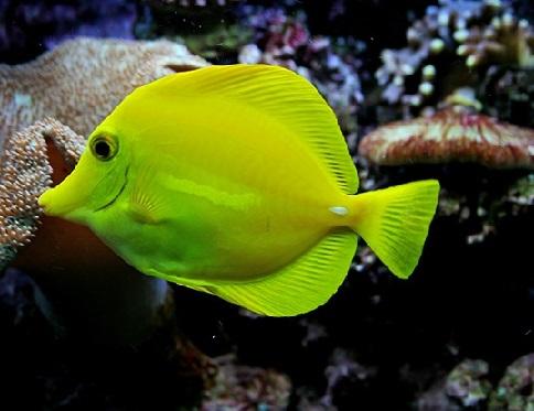 این ماهی ها شما را شگفت زده میکند