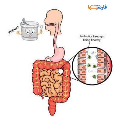 پروبیوتیک چیست؟چه خوراکی های پربیوتیکی هستند؟