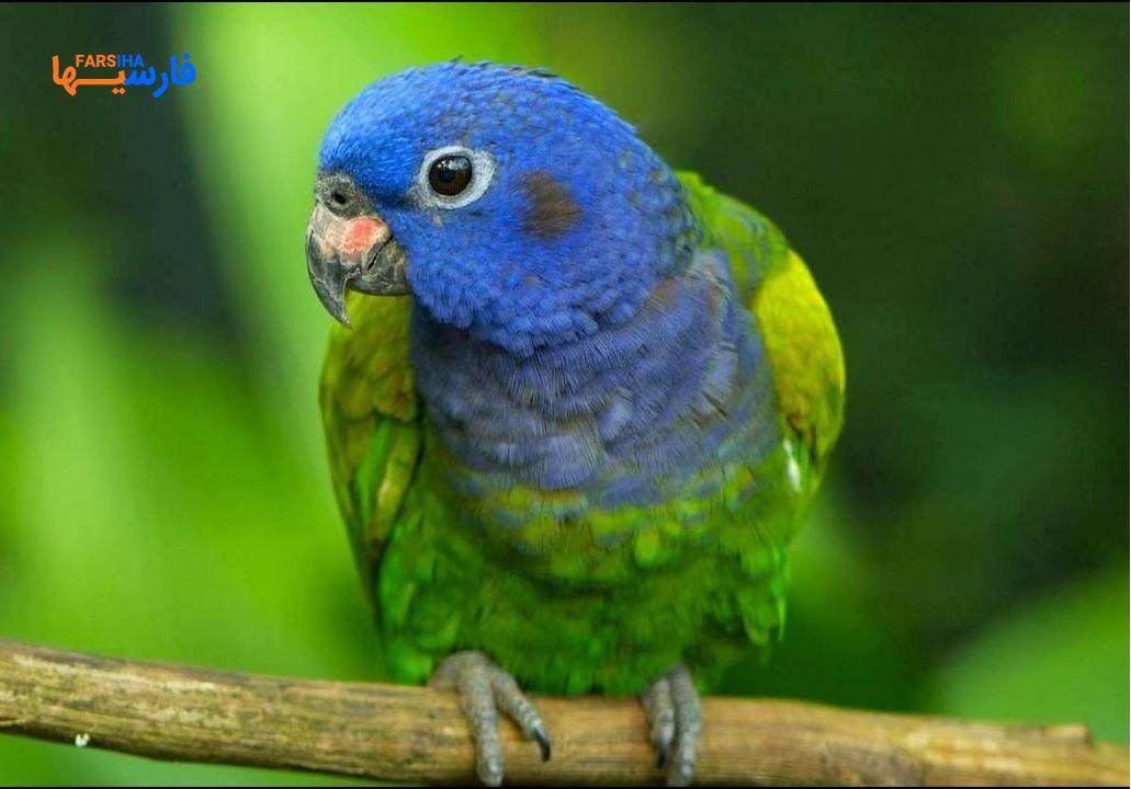 این پرنده ها را مهمان خانه تان کنید