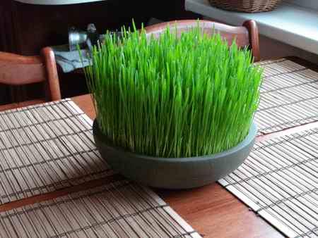 سبزه عید چند روزه سبز میشود (1)