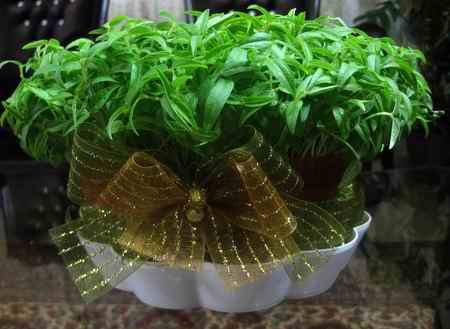 سبزه عید چند روزه سبز میشود (3)