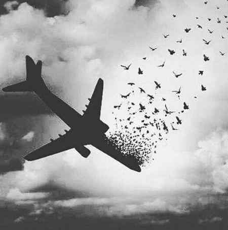 عکس تسلیت سقوط هواپیما برای پروفایل (5)