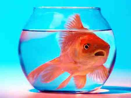 روش نگهداری از ماهی قرمز