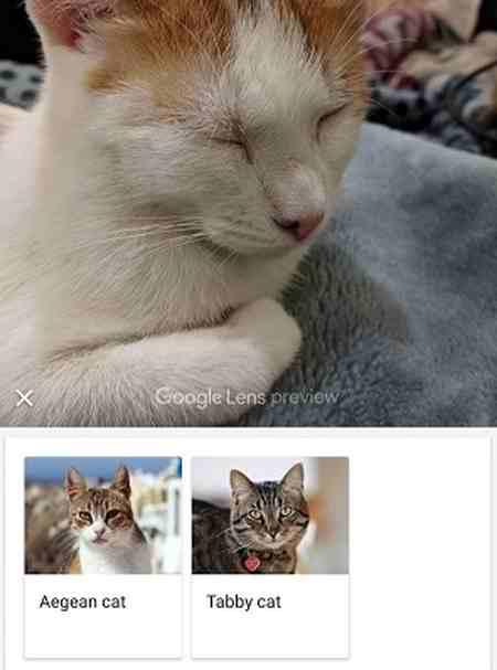 گوگل لنز چیست و آموزش برنامه Google Lens (2)