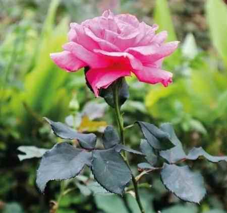 نوشته عینی و ذهنی درباره گل (1)