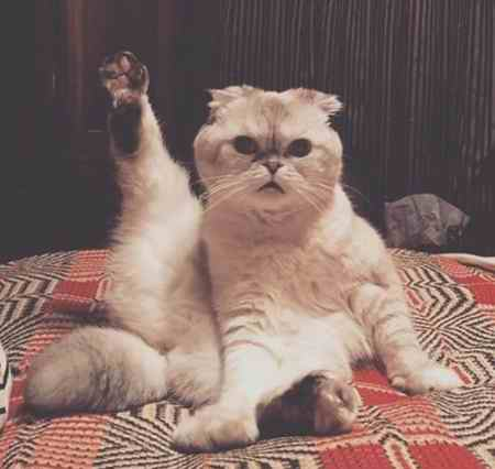 گربه خانگی تیلور سویفت 97 میلیون دلار می ارزد! (3)