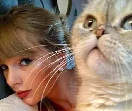 گربه خانگی تیلور سویفت 97 میلیون دلار می ارزد! (5)
