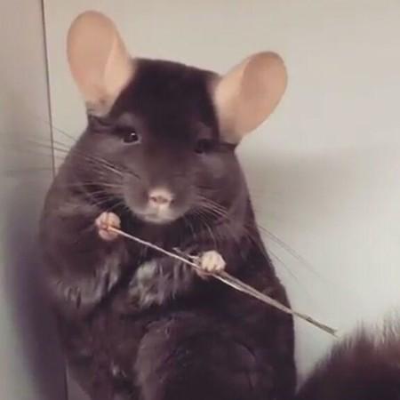 تعبیر خواب موش چیست