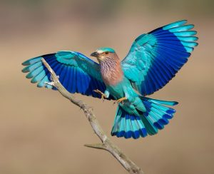 زیبایی این پرندگان حیرت آور است