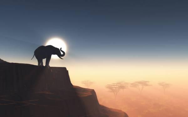 خواب فیل