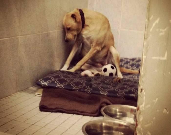 ناراحتی حیوانات