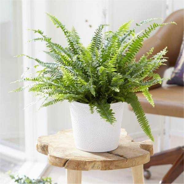 گیاه برای ضدعفونی خانه
