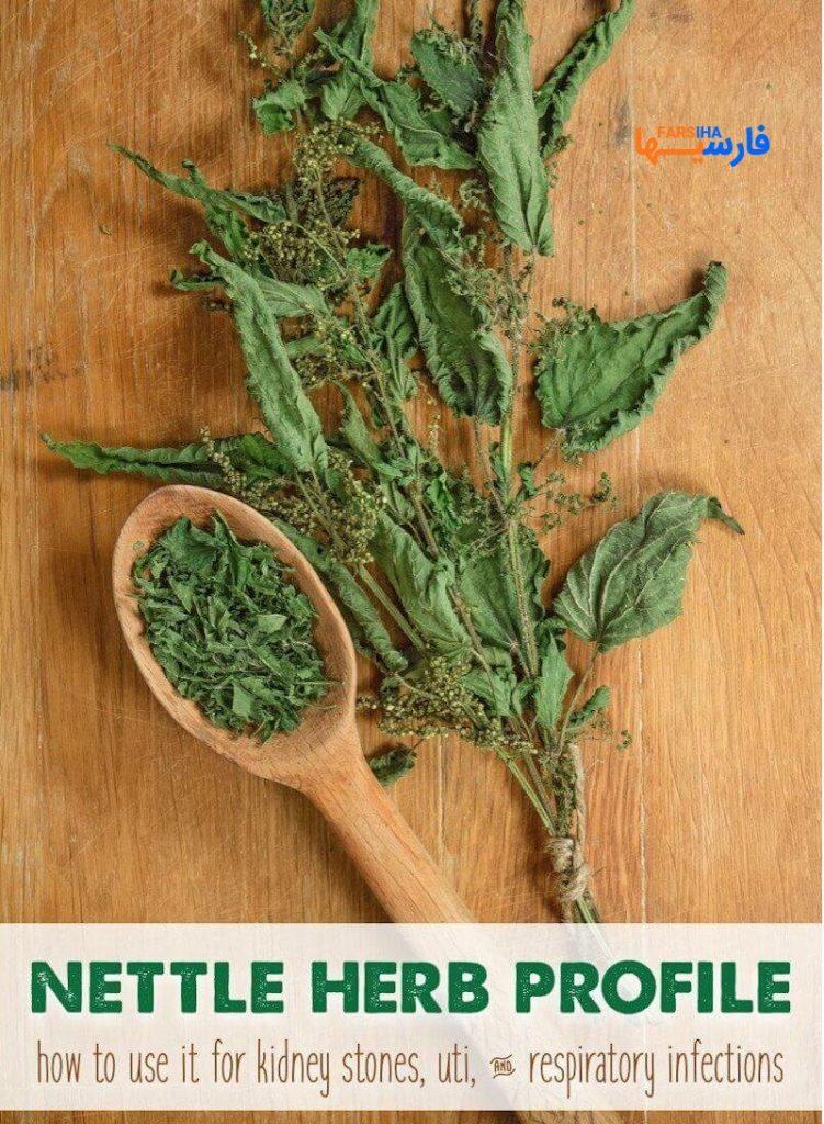 7 مزیت عالی گیاه گزنه که نمیدانستید