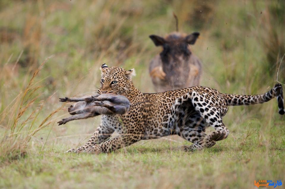 عکس از حیوانات