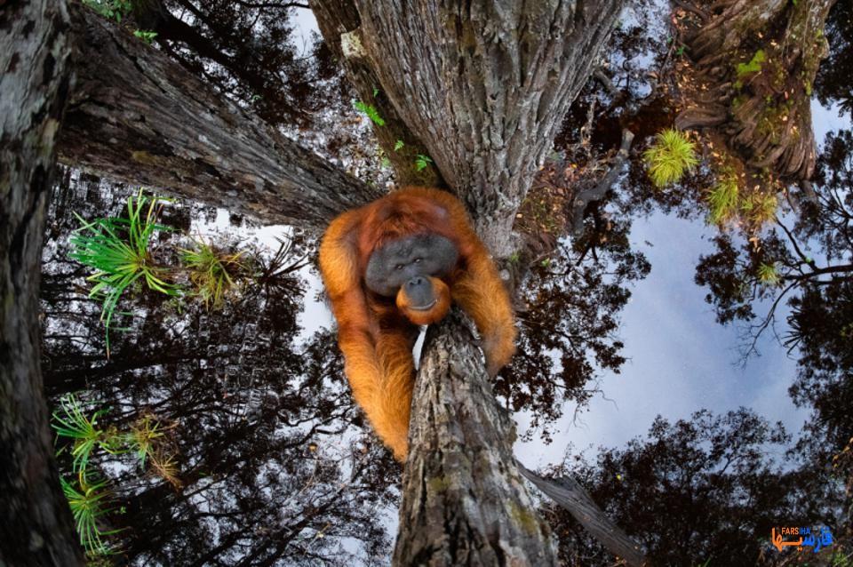 عکس از حیوانات که جایزه جهانی بردند