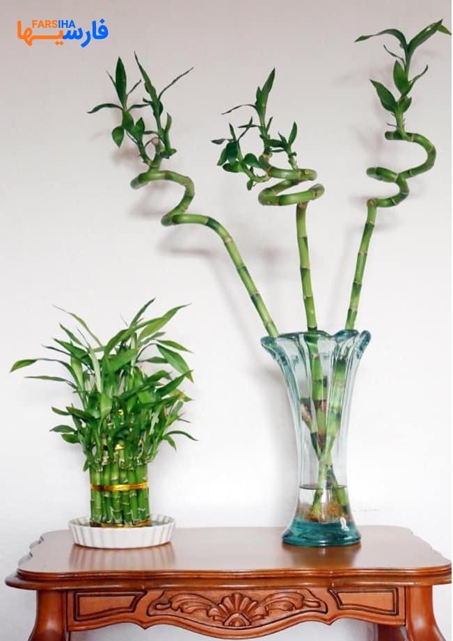 10 گیاه دفع کننده انرژی منفی برای محیط خانه