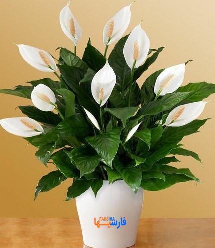 گیاه دفع کننده انرژی منفی