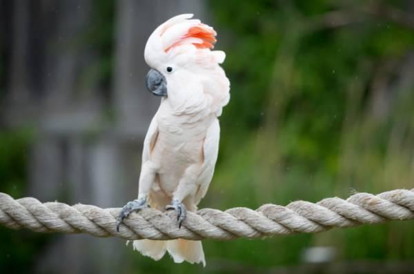 پرنده سخنگو باهوش