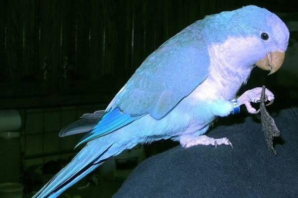 باهوش ترین پرنده سخنگو