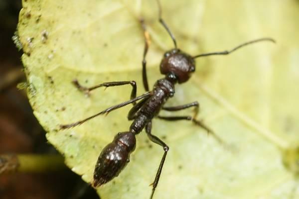 حشرات مرگبار