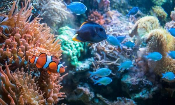 حیوانات دریایی دو جنسیتی
