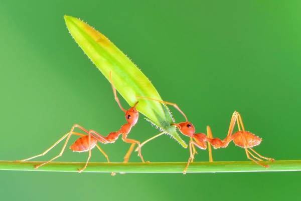 قدرت مورچه
