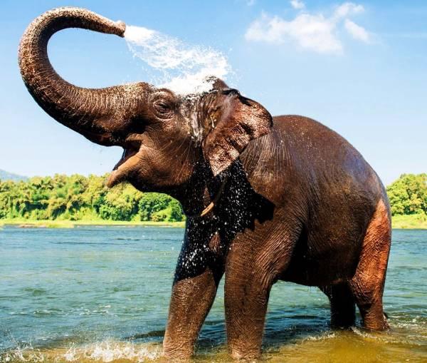 کاربرد خرطوم فیل