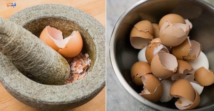 کاربرد پوسته تخم مرغ