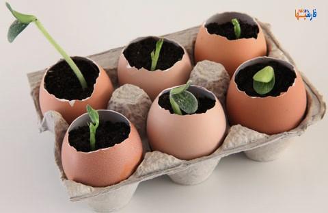 استفاده های مختلف از پوسته تخم مرغ