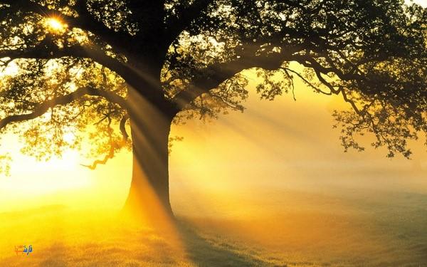 مزایای نور خورشید