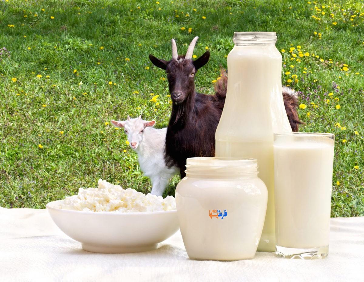 فواید شیر بز
