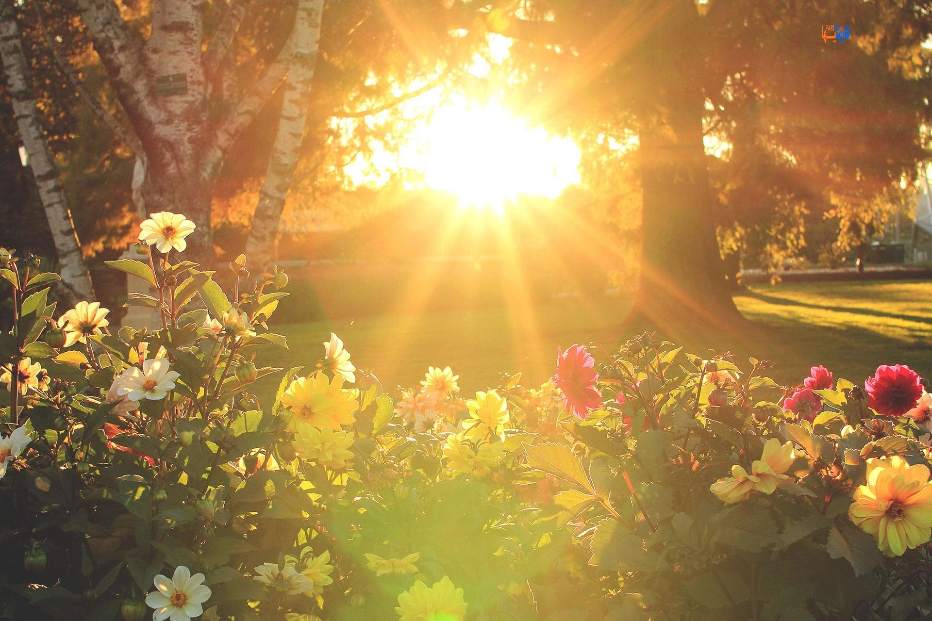 فواید نور خورشید